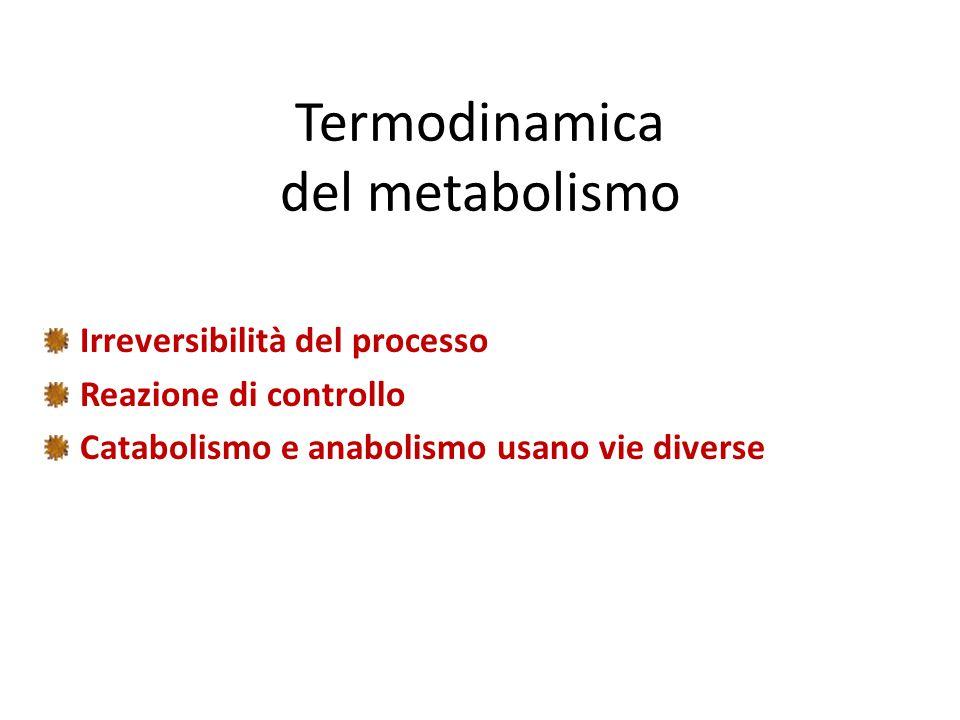 Termodinamica del metabolismo Irreversibilità del processo Reazione di controllo Catabolismo e anabolismo usano vie diverse