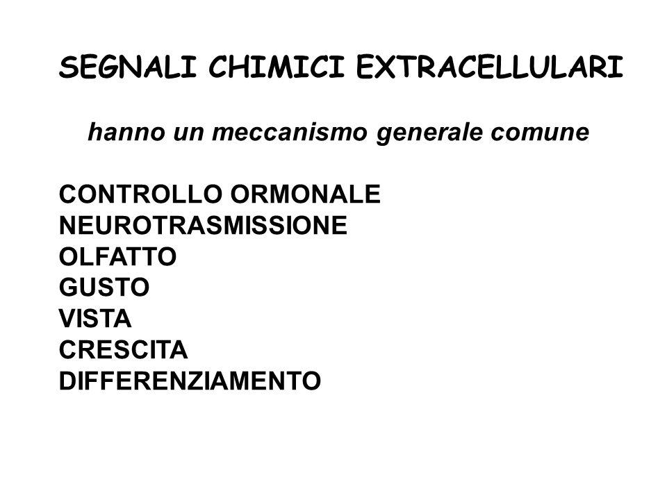 SEGNALI CHIMICI EXTRACELLULARI hanno un meccanismo generale comune CONTROLLO ORMONALE NEUROTRASMISSIONE OLFATTO GUSTO VISTA CRESCITA DIFFERENZIAMENTO