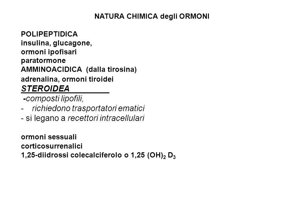NATURA CHIMICA degli ORMONI POLIPEPTIDICA insulina, glucagone, ormoni ipofisari paratormone AMMINOACIDICA (dalla tirosina) adrenalina, ormoni tiroidei STEROIDEA -composti lipofili, -richiedono trasportatori ematici - si legano a recettori intracellulari ormoni sessuali corticosurrenalici 1,25-diidrossi colecalciferolo o 1,25 (OH) 2 D 3