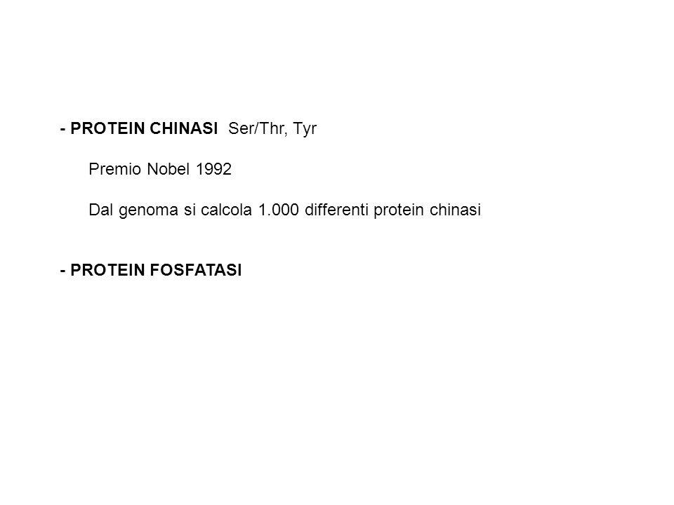 - PROTEIN CHINASI Ser/Thr, Tyr Premio Nobel 1992 Dal genoma si calcola 1.000 differenti protein chinasi - PROTEIN FOSFATASI