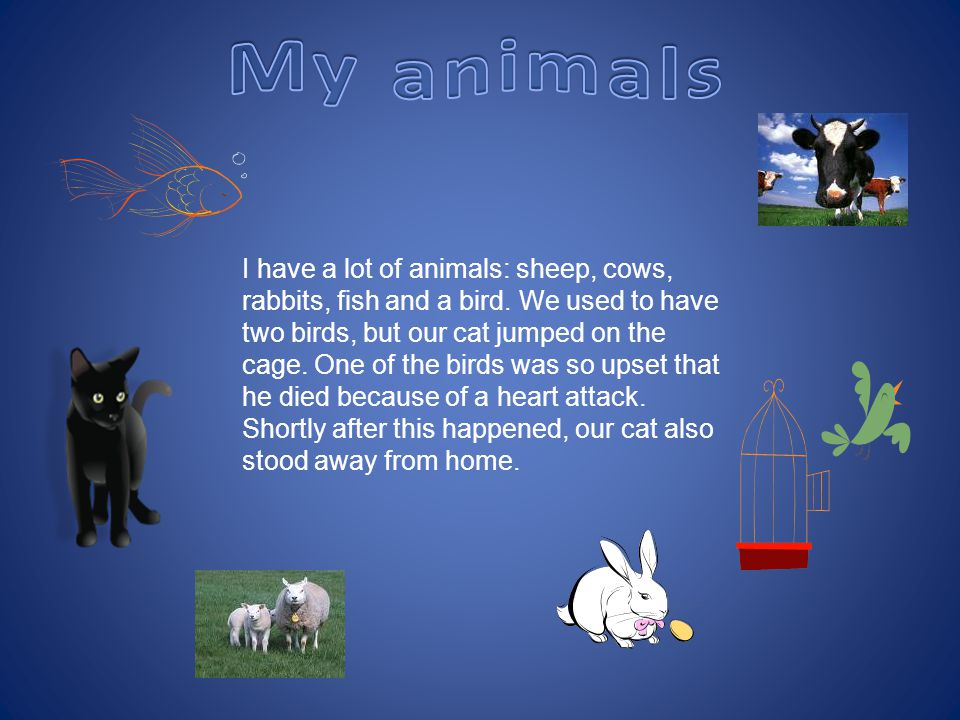 I have a lot of animals: sheep, cows, rabbits, fish and a bird.