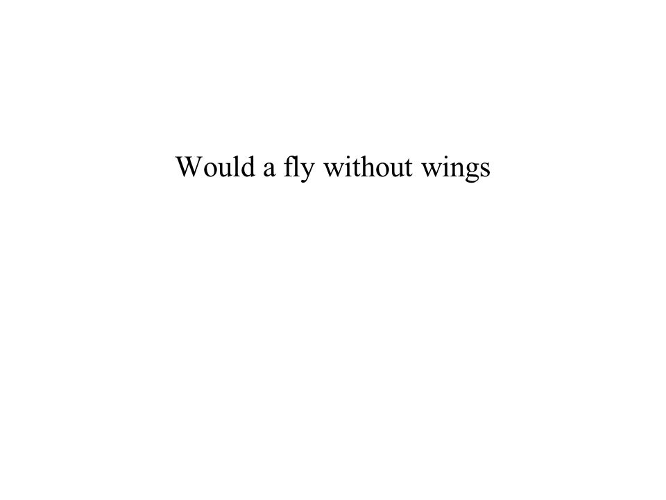 Would a fly without wings