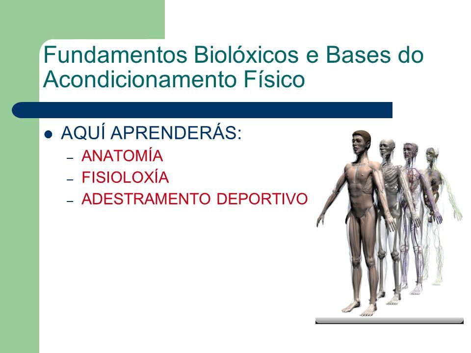 Fundamentos Biolóxicos e Bases do Acondicionamento Físico AQUÍ APRENDERÁS: – ANATOMÍA – FISIOLOXÍA – ADESTRAMENTO DEPORTIVO