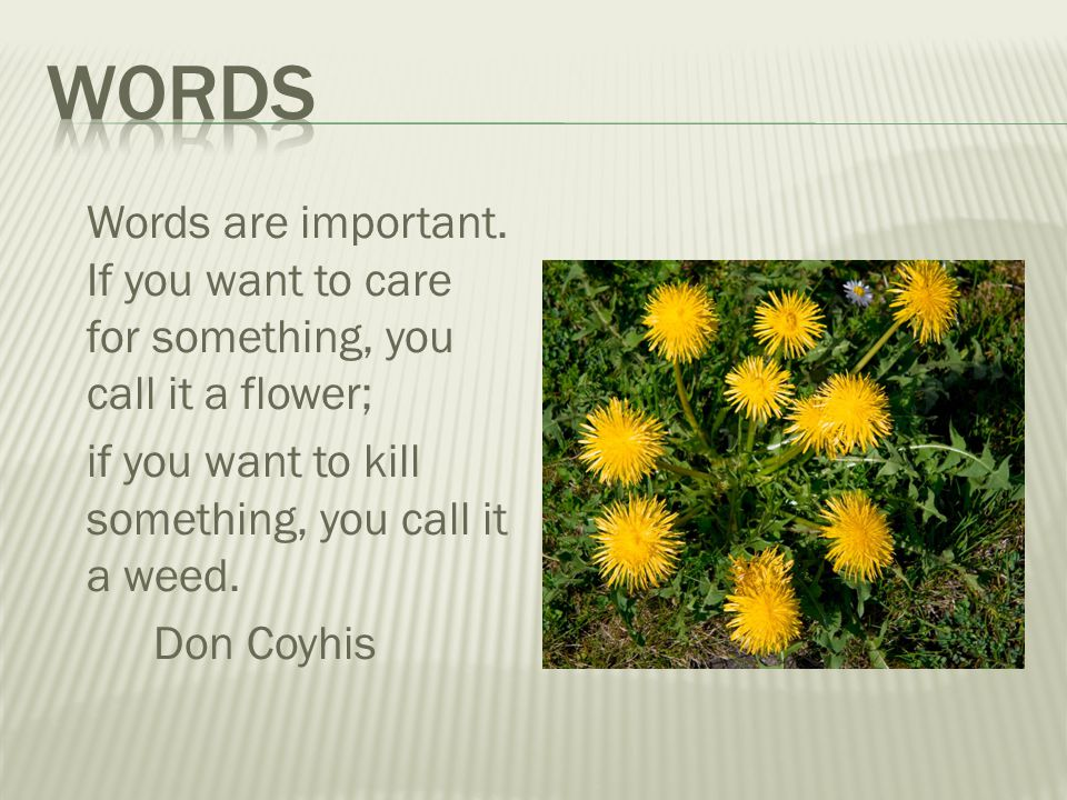 Words are important. If you want to care for something, you call it a flower; if you want to kill something, you call it a weed. Don Coyhis
