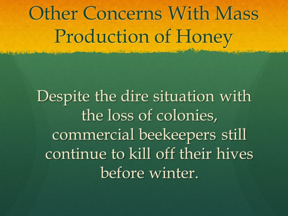 Other Concerns With Mass Production of Honey Despite the dire situation with the loss of colonies, commercial beekeepers still continue to kill off their hives before winter.