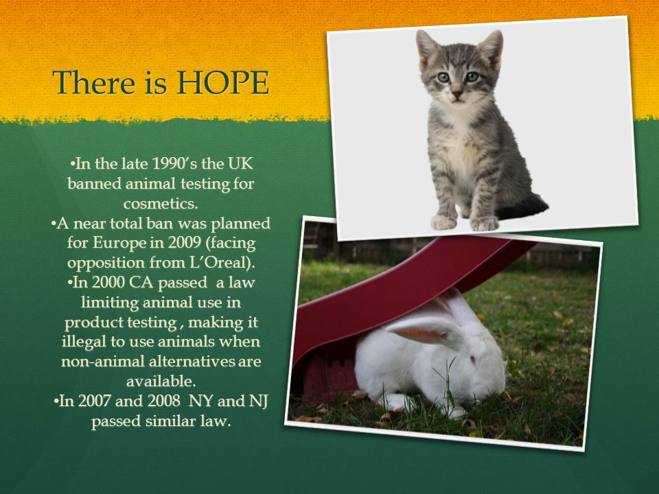 There is HOPE In the late 1990's the UK banned animal testing for cosmetics.