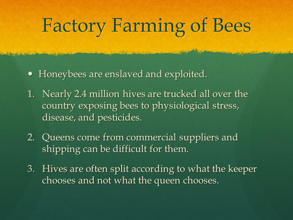 Factory Farming of Bees Honeybees are enslaved and exploited.