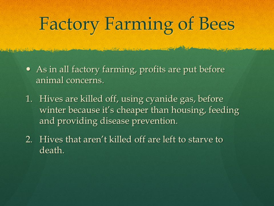 Factory Farming of Bees As in all factory farming, profits are put before animal concerns.