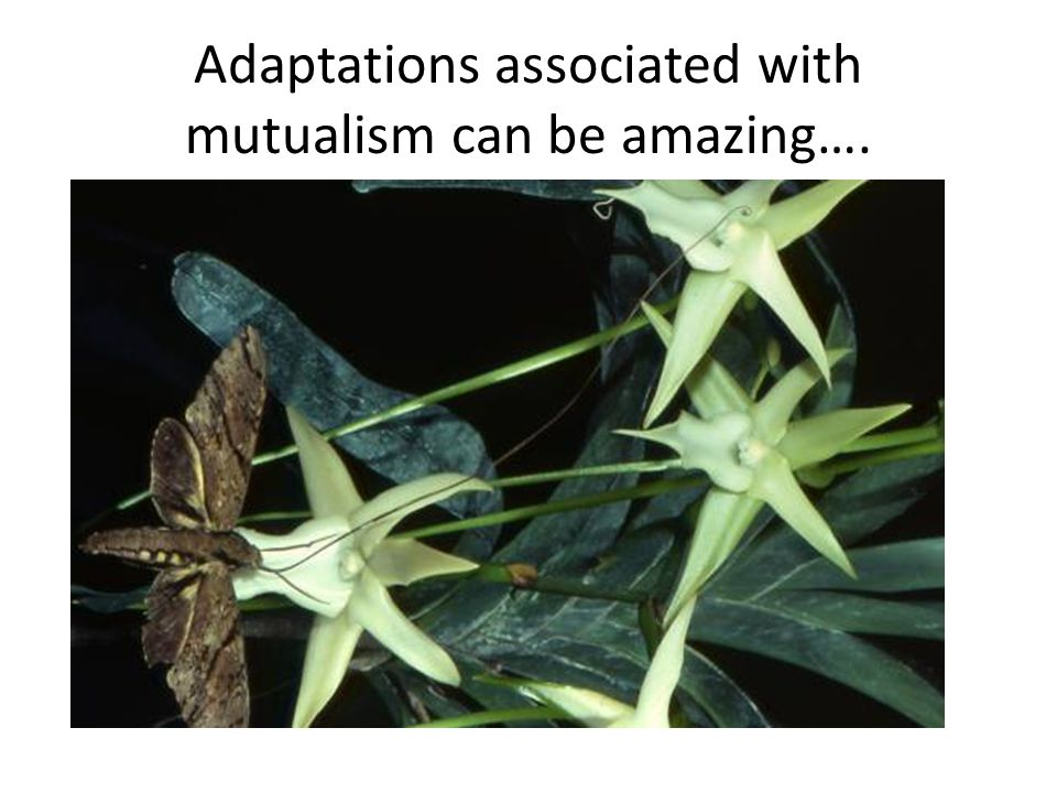 Adaptations associated with mutualism can be amazing…. www.waynesworld.com