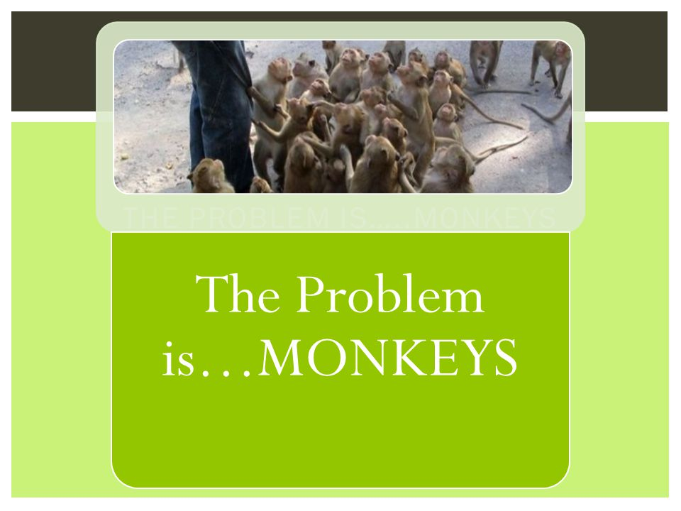 The Monkey is NOT the problem or the project! It is simply the next move. REMEMBER