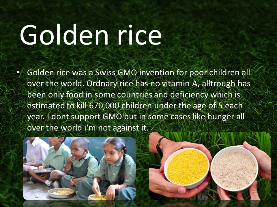 Golden rice was a Swiss GMO invention for poor children all over the world.
