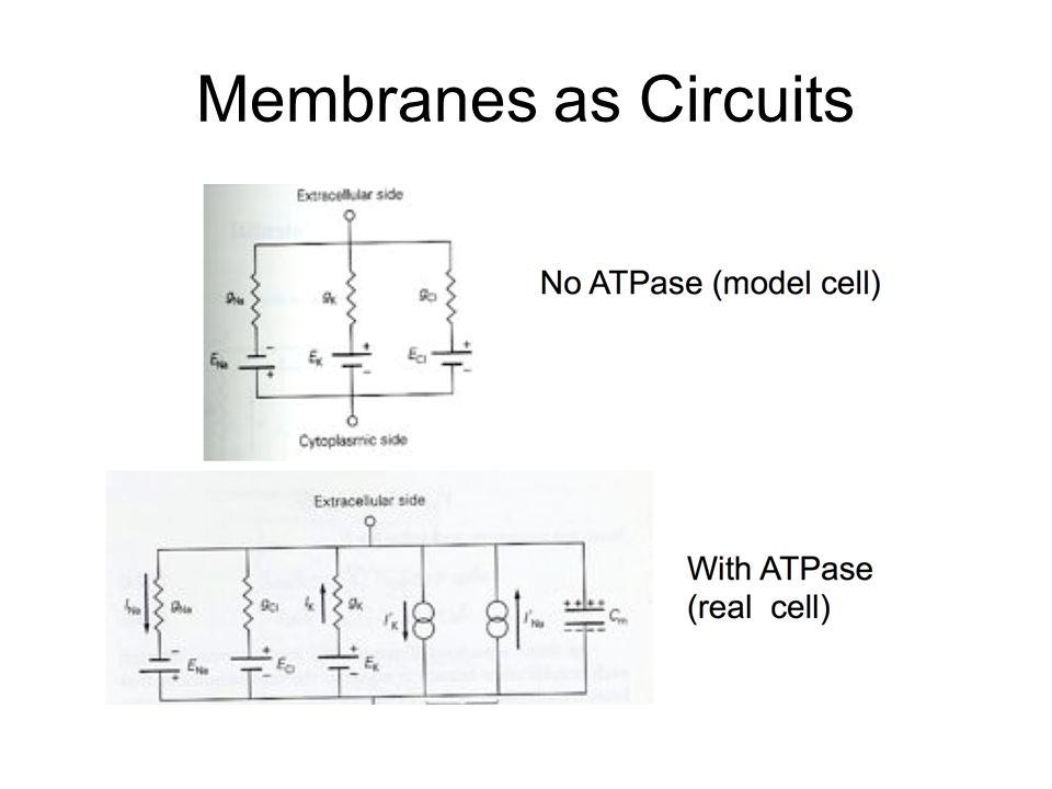 Membranes as Circuits