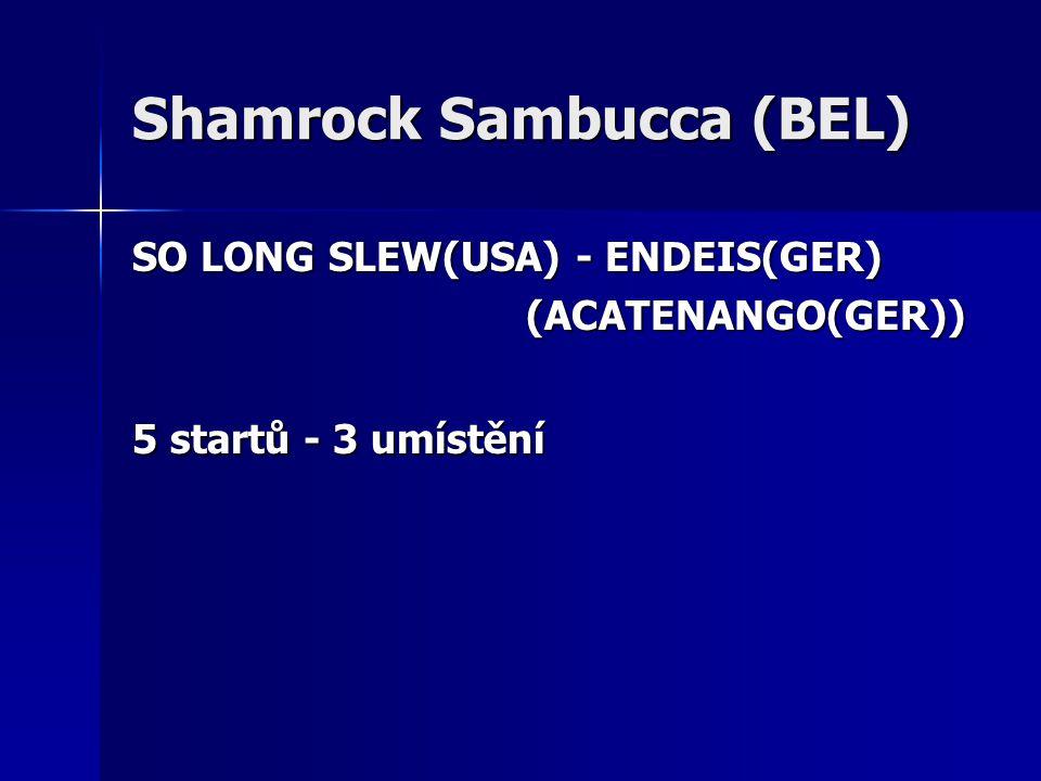 Shamrock Sambucca (BEL) SO LONG SLEW(USA) - ENDEIS(GER) (ACATENANGO(GER)) (ACATENANGO(GER)) 5 startů - 3 umístění