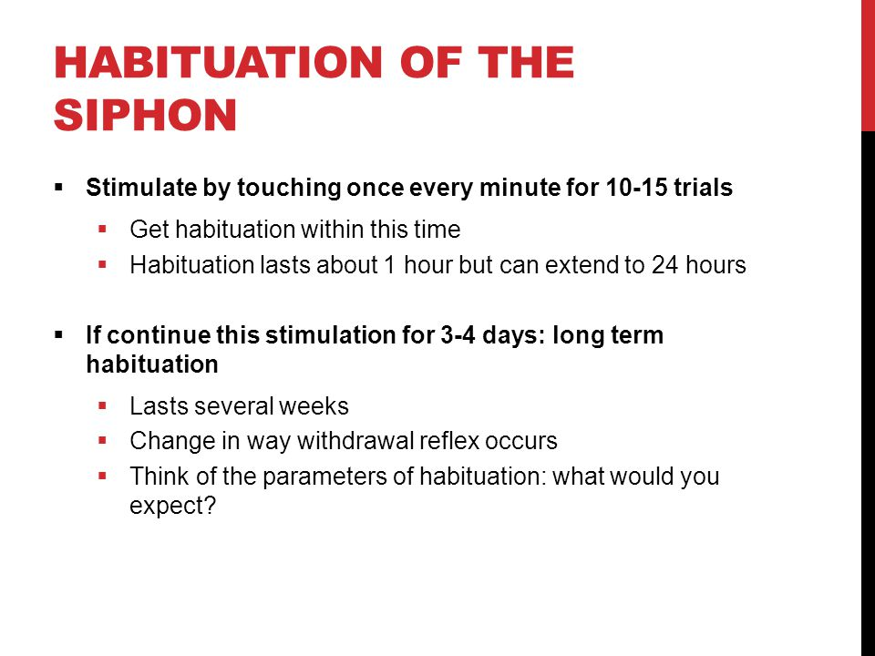 HABITUATION OF THE SIPHON  Stimulate by touching once every minute for 10-15 trials  Get habituation within this time  Habituation lasts about 1 ho