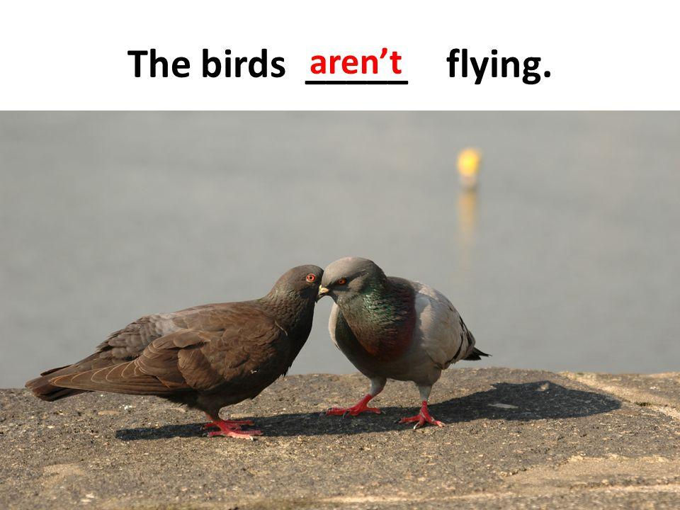 The birds _____ flying. aren't