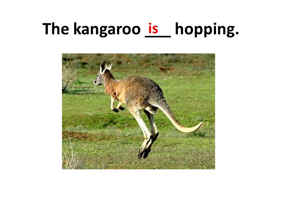 The kangaroo ___ hopping. is