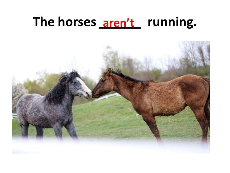 The horses ______ running. aren't
