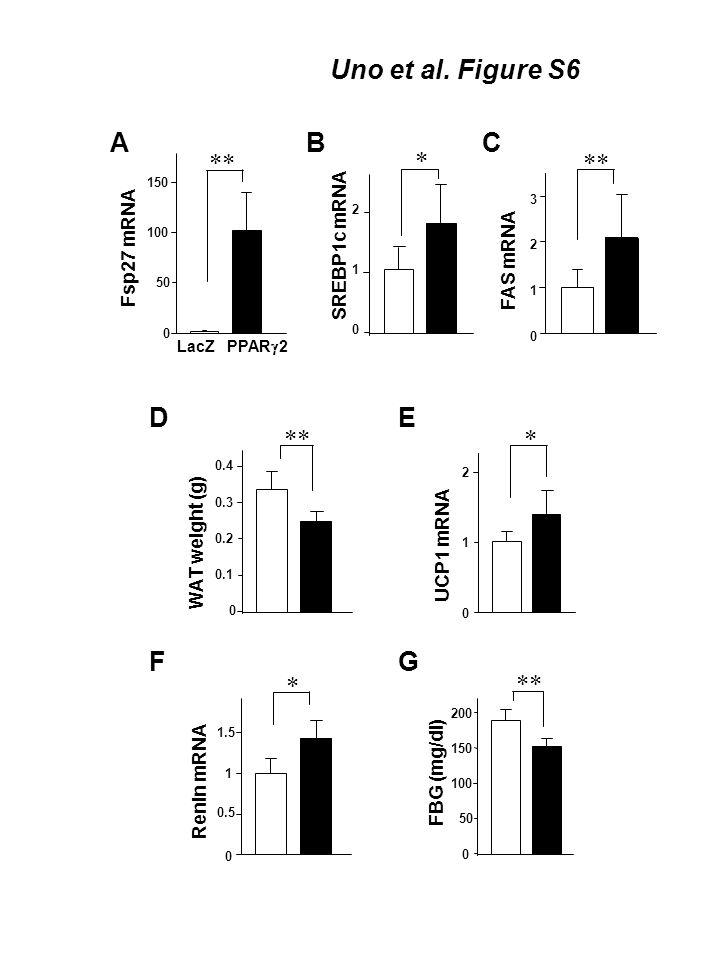 F D WAT weight (g) 0 0.1 0.2 0.3 0.4 ** A Fsp27 mRNA PPAR  2 LacZ C FAS mRNA 0 1 2 3 ** B SREBP1c mRNA E UCP1 mRNA * 0 1 2 * 0 1 2 Uno et al.