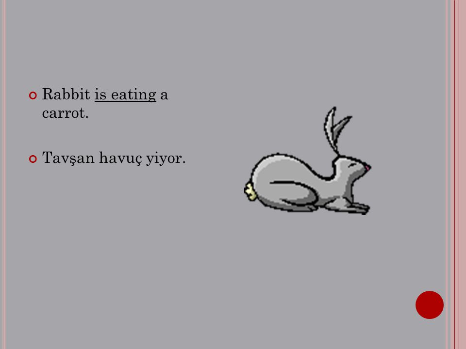 Rabbit is eating a carrot. Tavşan havuç yiyor.