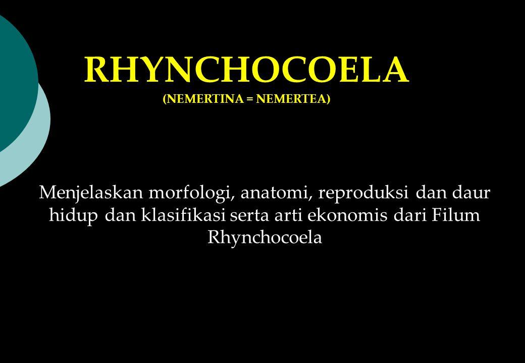 Menjelaskan morfologi, anatomi, reproduksi dan daur hidup dan klasifikasi serta arti ekonomis dari Filum Rhynchocoela RHYNCHOCOELA (NEMERTINA = NEMERT