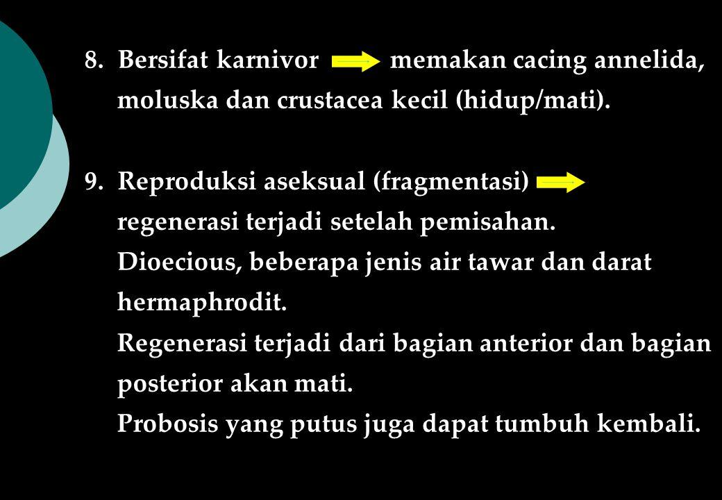 8.Bersifat karnivor memakan cacing annelida, moluska dan crustacea kecil (hidup/mati). 9.Reproduksi aseksual (fragmentasi) regenerasi terjadi setelah