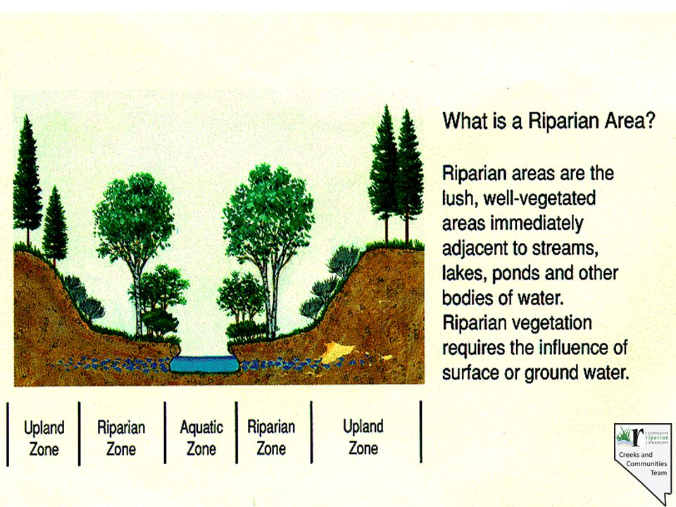 Riparian Proper Functioning Condition A process for assessment A defined condition A starting point A common language An interdisciplinary team approach