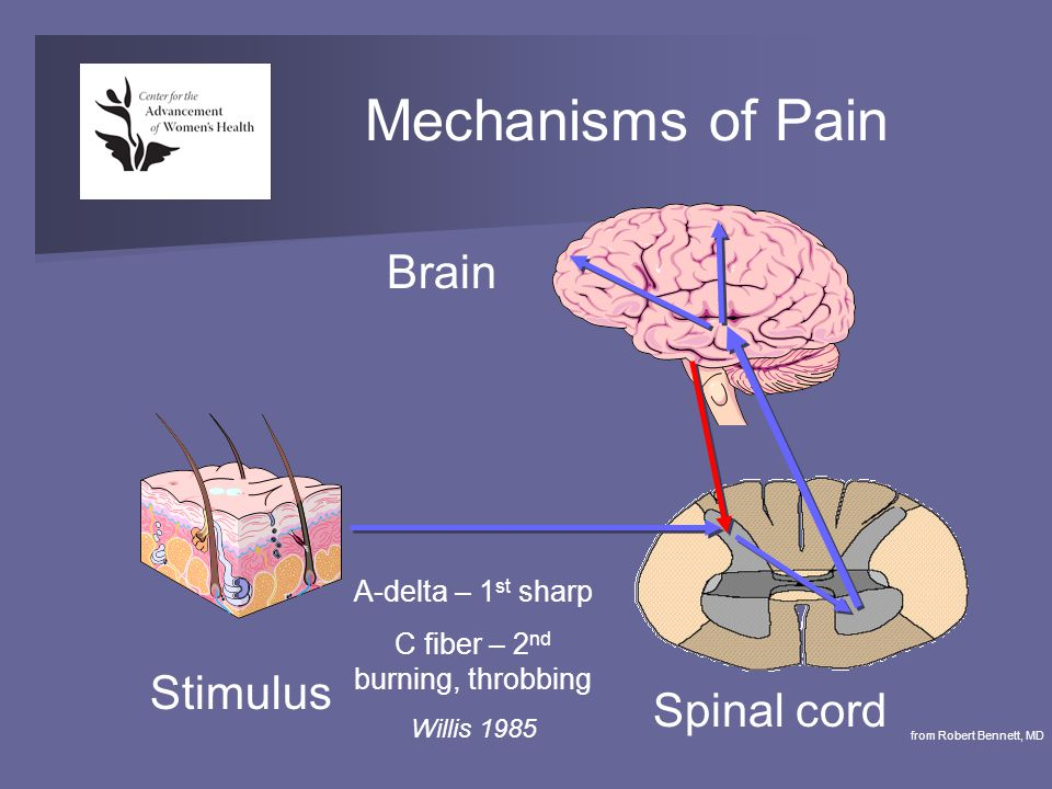 Mechanisms of Pain Stimulus Spinal cord Brain from Robert Bennett, MD A-delta – 1 st sharp C fiber – 2 nd burning, throbbing Willis 1985