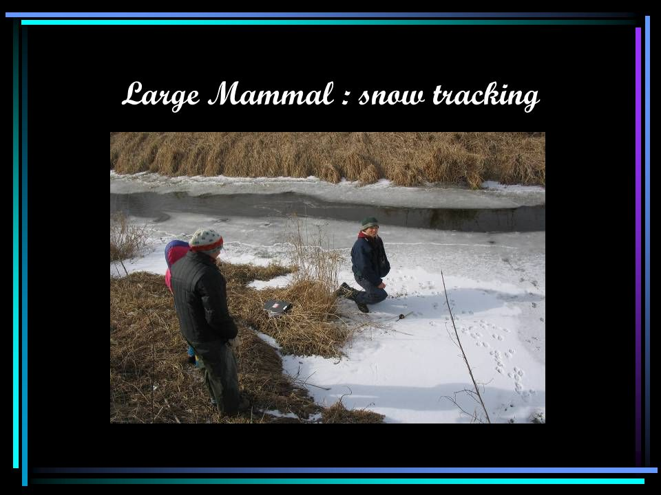Large Mammal : snow tracking