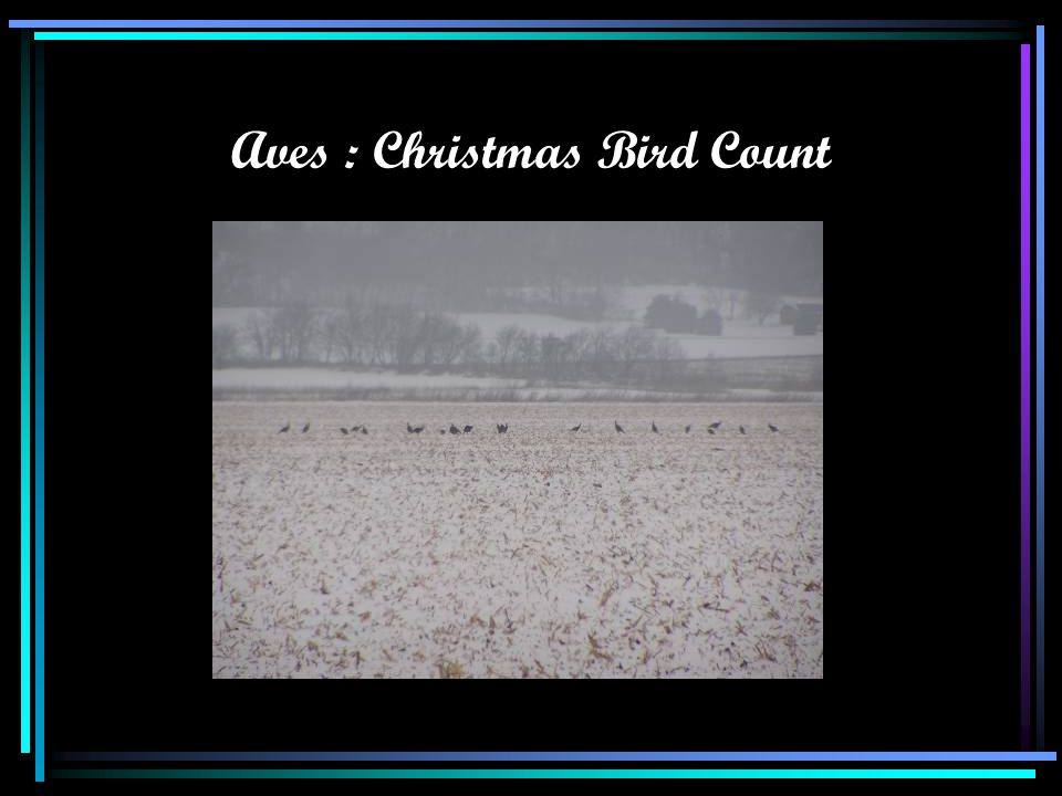 Aves : Christmas Bird Count