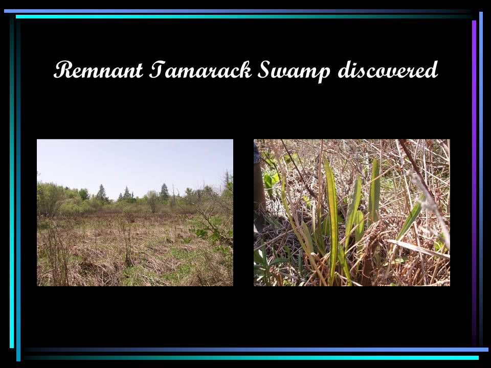 Remnant Tamarack Swamp discovered