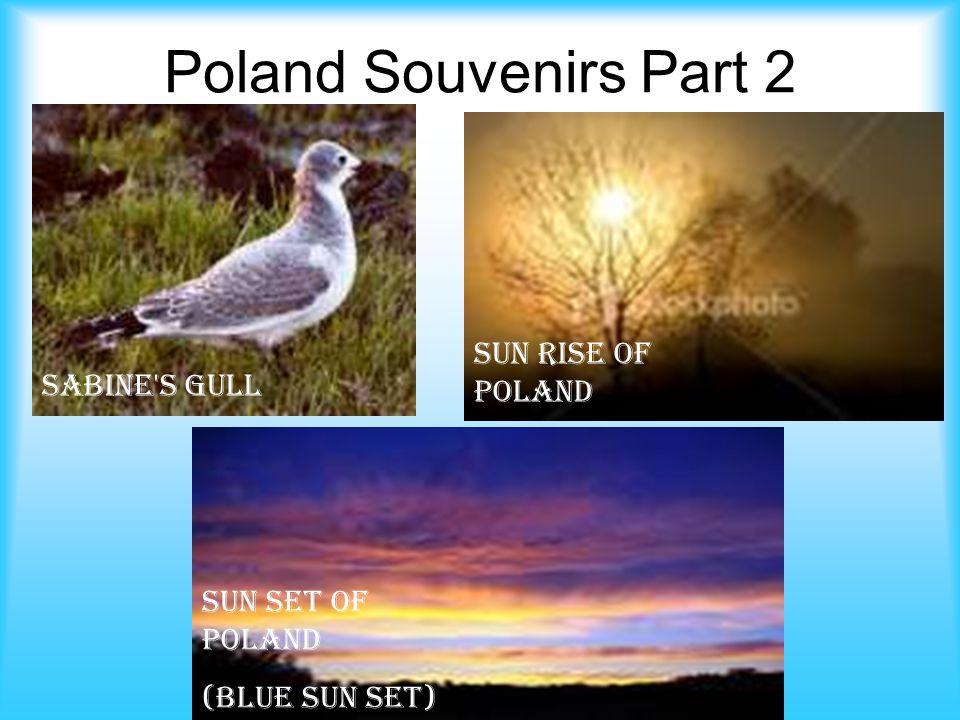 Poland Souvenirs Part 2 Sabine s Gull Sun Rise of Poland Sun Set of Poland (Blue Sun Set)