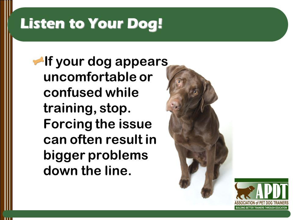 Listen to Your Dog. If your dog appears uncomfortable or confused while training, stop.