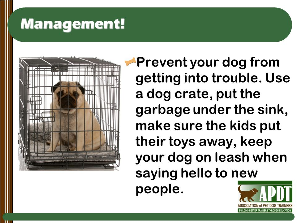 Management. Prevent your dog from getting into trouble.