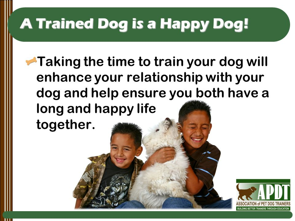 A Trained Dog is a Happy Dog.