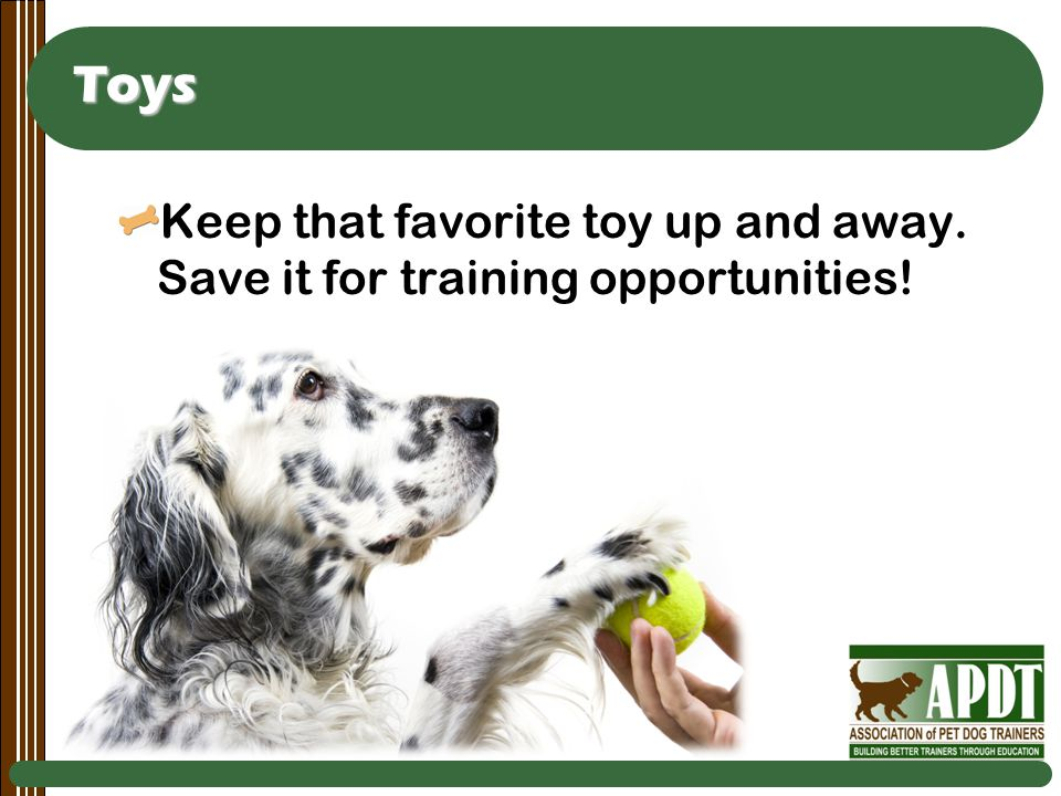 Toys Keep that favorite toy up and away. Save it for training opportunities!