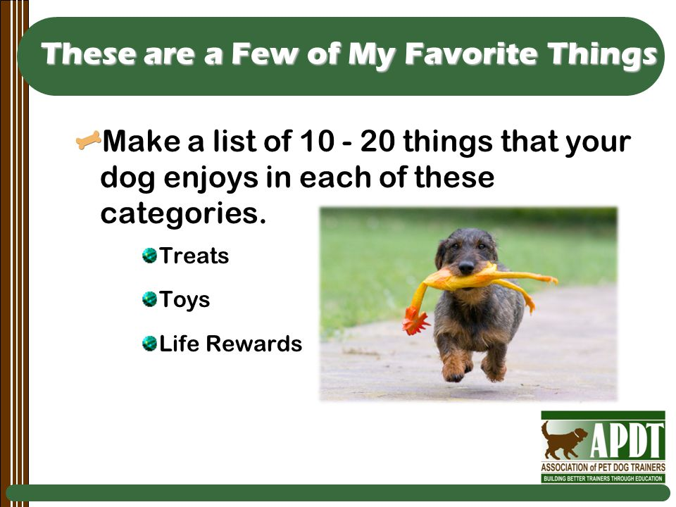 These are a Few of My Favorite Things Make a list of 10 - 20 things that your dog enjoys in each of these categories.