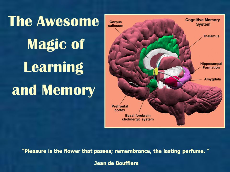 The Awesome Magic of Learning and Memory Pleasure is the flower that passes; remembrance, the lasting perfume.