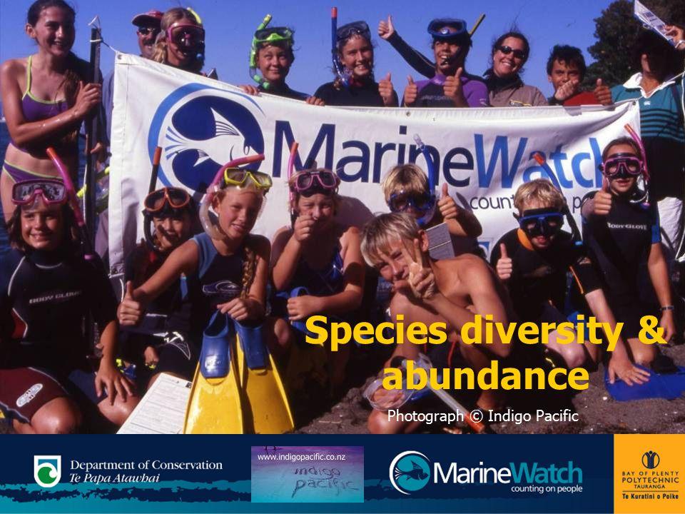 Species diversity & abundance Photograph © Indigo Pacific