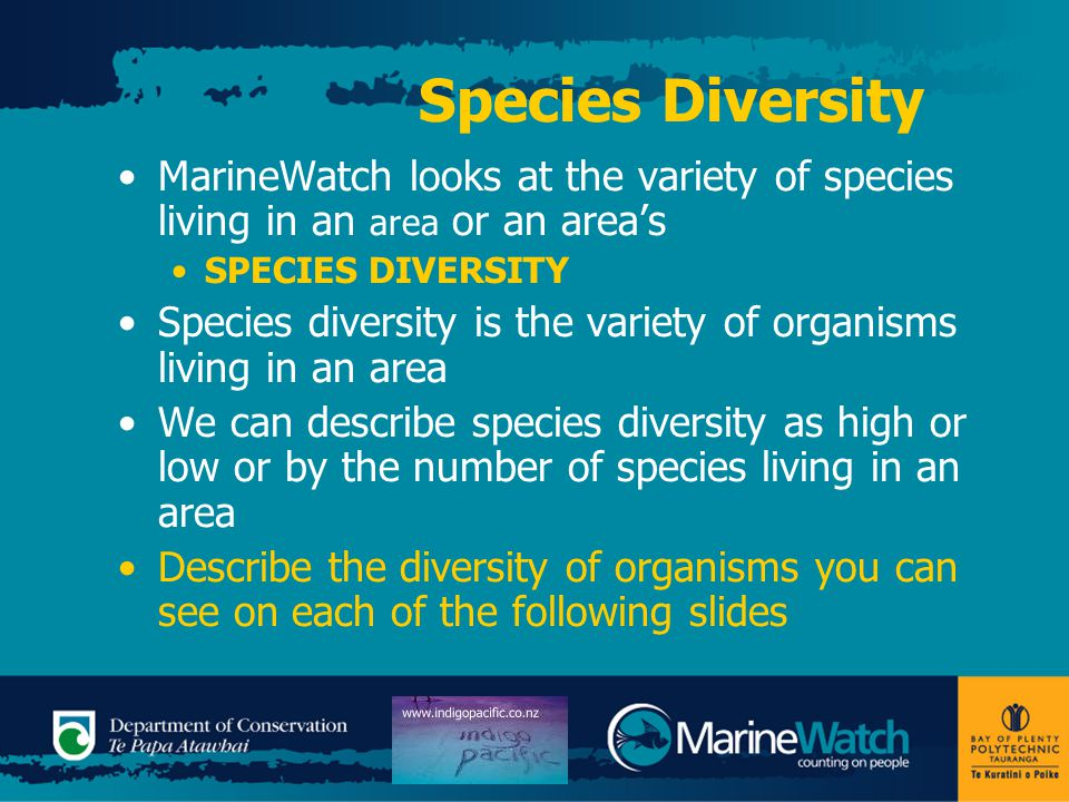 Species Diversity MarineWatch looks at the variety of species living in an area or an area's SPECIES DIVERSITY Species diversity is the variety of organisms living in an area We can describe species diversity as high or low or by the number of species living in an area Describe the diversity of organisms you can see on each of the following slides