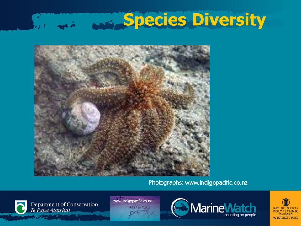 Species Diversity Photographs: www.indigopacific.co.nz