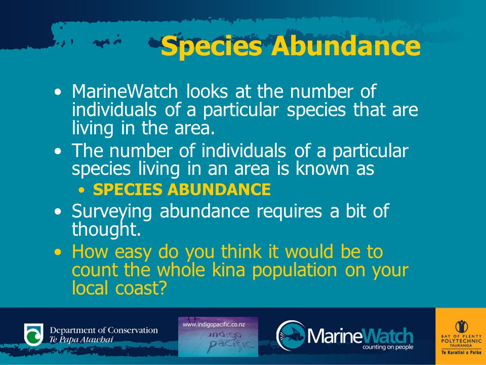 Species Abundance MarineWatch looks at the number of individuals of a particular species that are living in the area.