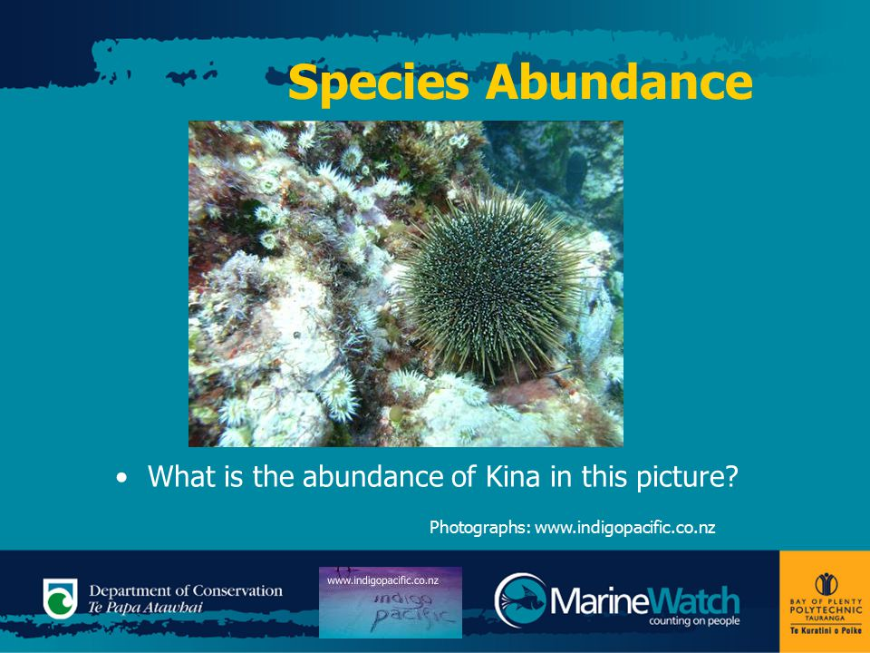 Species Abundance What is the abundance of Kina in this picture.