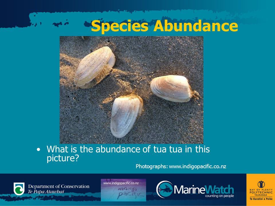 Species Abundance What is the abundance of tua tua in this picture.