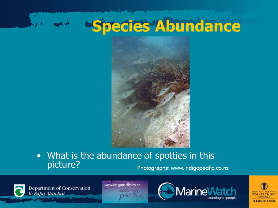 Species Abundance What is the abundance of spotties in this picture.