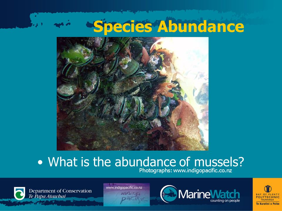 Species Abundance What is the abundance of mussels Photographs: www.indigopacific.co.nz