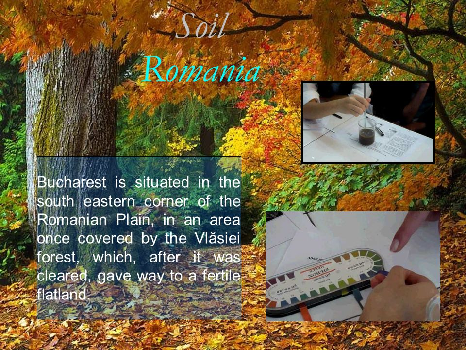Soil Romania Bucharest is situated in the south eastern corner of the Romanian Plain, in an area once covered by the Vlăsiei forest, which, after it w