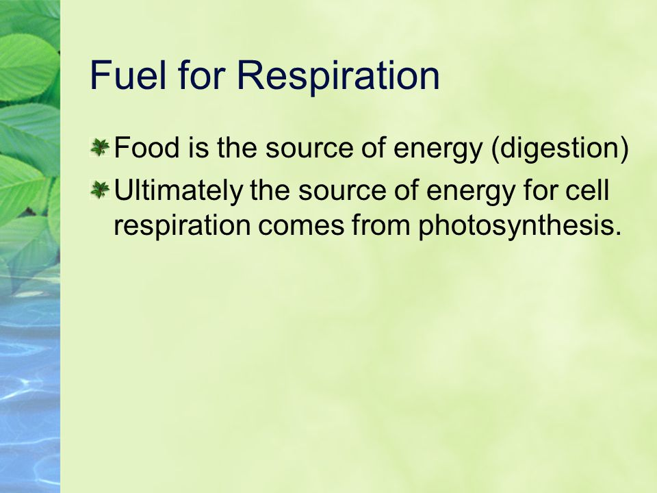 Fuel for Respiration Food is the source of energy (digestion) Ultimately the source of energy for cell respiration comes from photosynthesis.