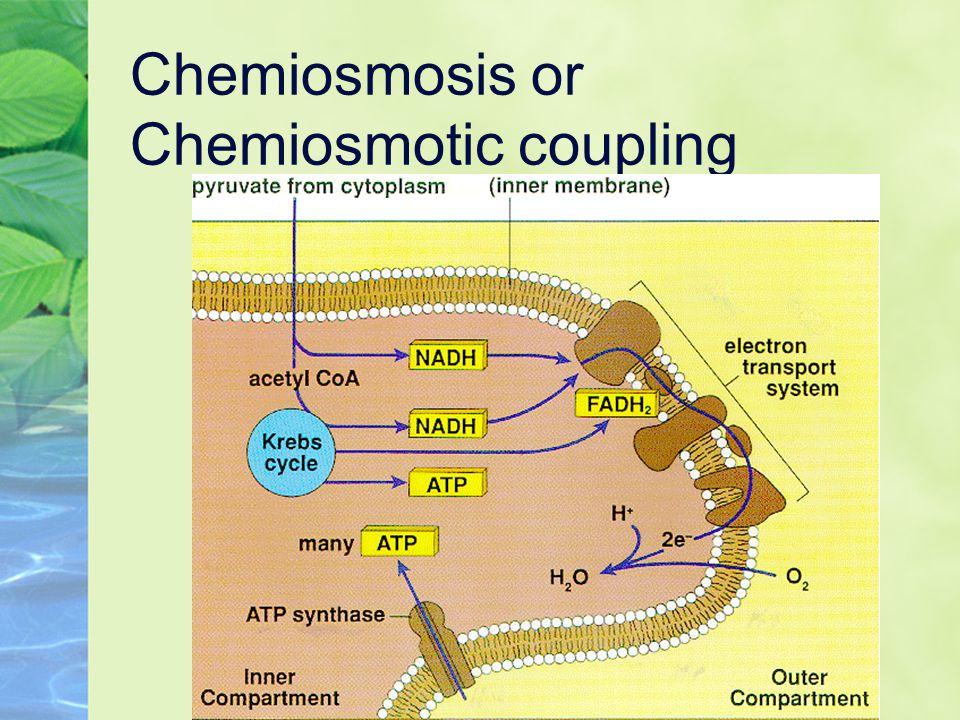 Chemiosmosis or Chemiosmotic coupling