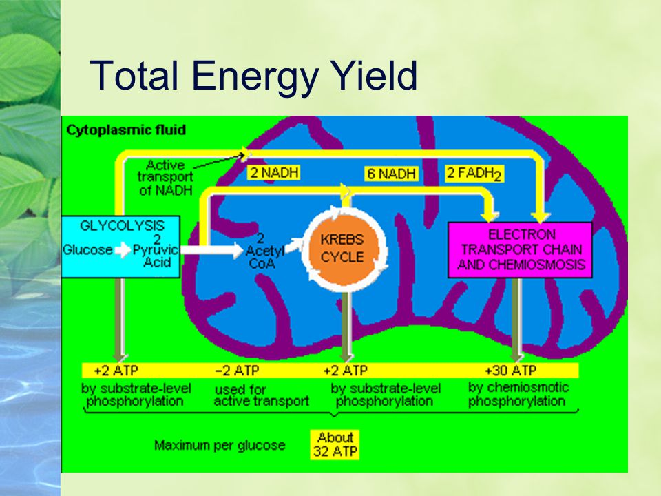 Total Energy Yield