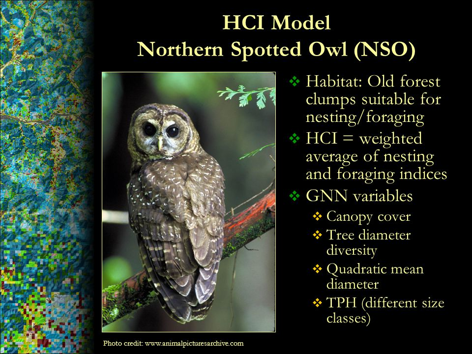 HCI Model Northern Spotted Owl (NSO)  Habitat: Old forest clumps suitable for nesting/foraging  HCI = weighted average of nesting and foraging indic